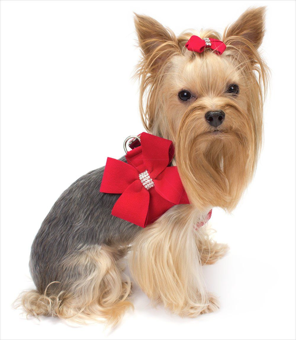Susan Lanci Nouveau Bow Step-In Harness   Free dogs and Dog
