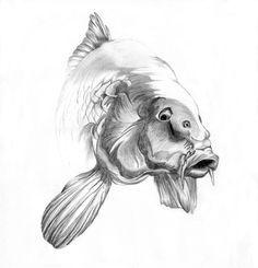 Carp drawing | Fish drawings, Carp tattoo, Fish artwork