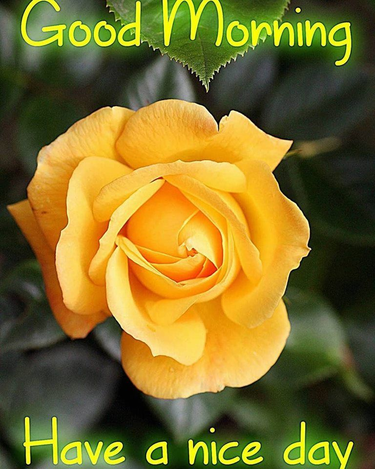 Light Tangerine Good Morning Have A Nice Day Quote Good Morning Flowers Good Day Quotes Good Morning Greetings