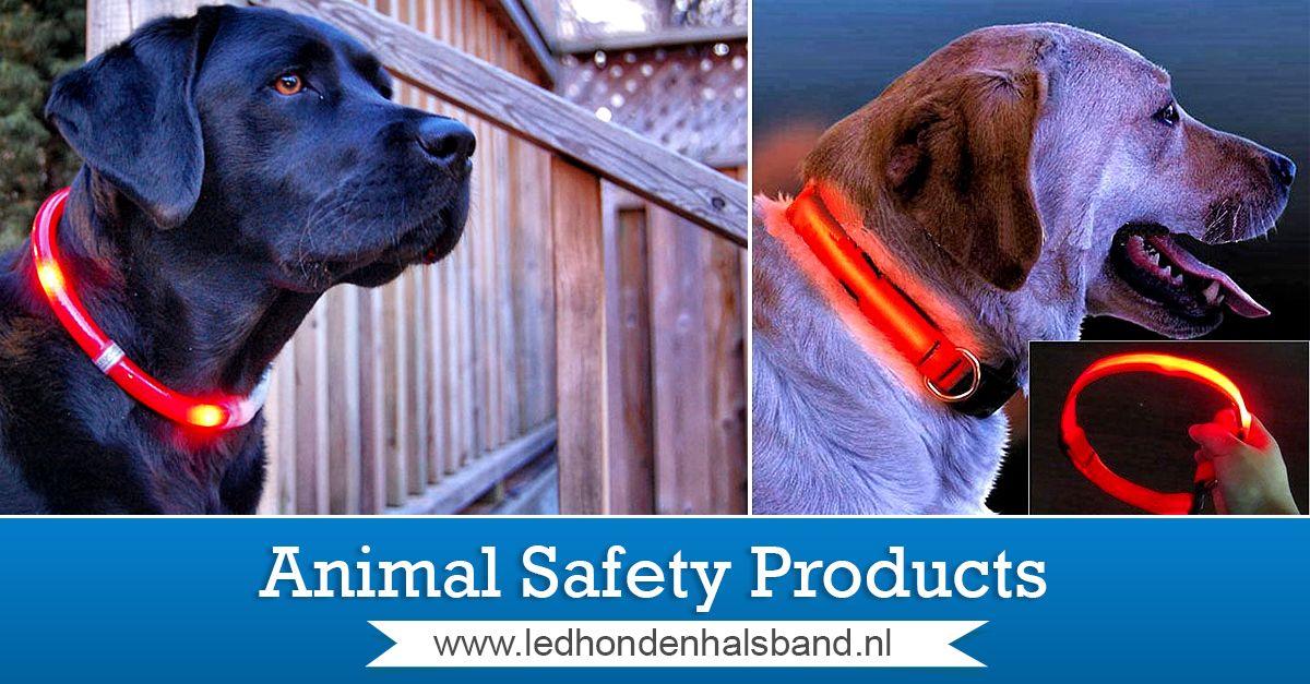 httpwwwledhondenhalsbandnlled halsband hond