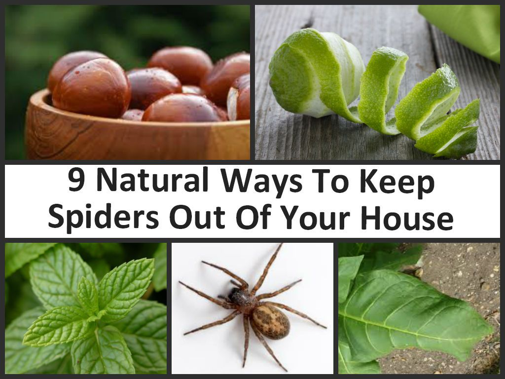 Natural Ways To Get Rid Of Bugs In My Garden
