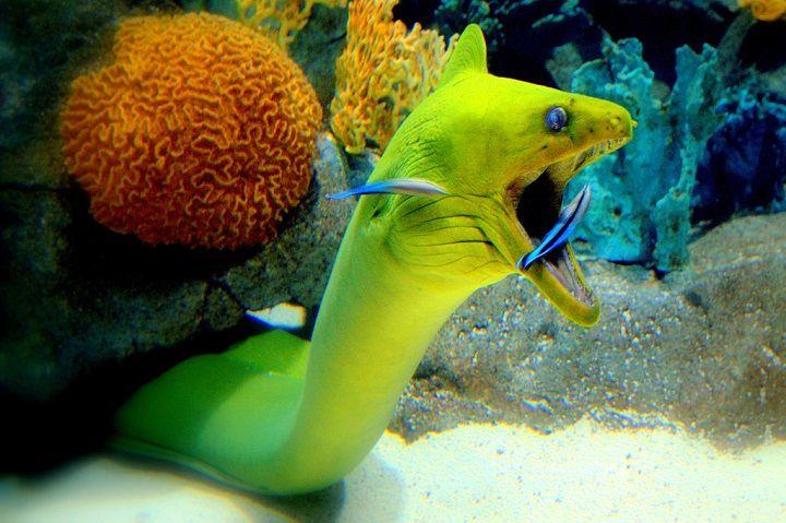 Marine life of Tenerife