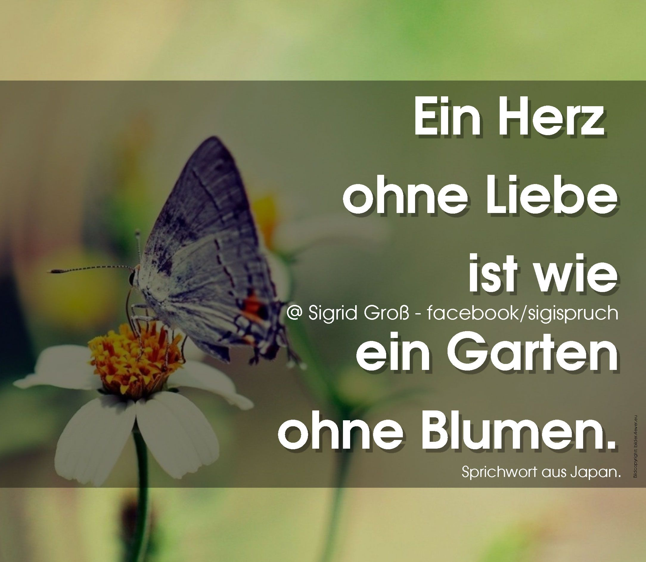 Ein Herz Ohne Liebe Ist Wie Ein Garten Ohne Blumen