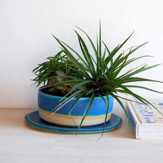 Plant Pot Set Shallow Plant Container Succulent Pot Cactus Pot Succulent Pots Plants Container Plants