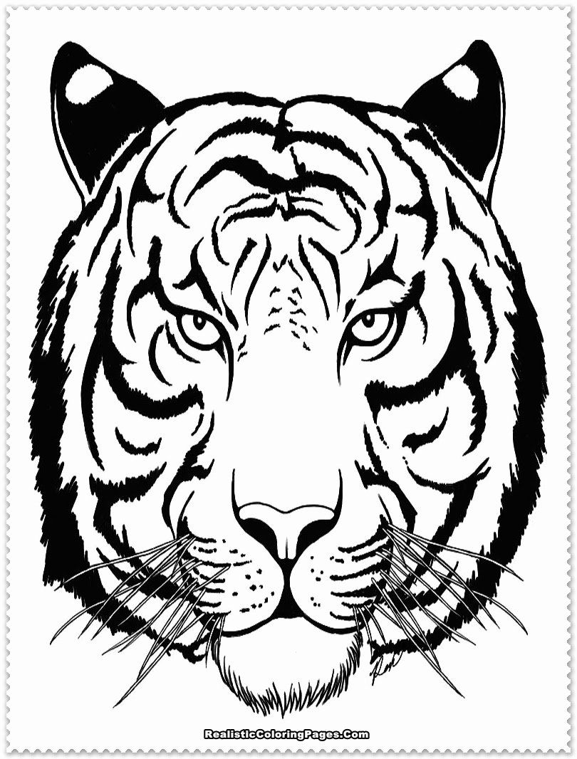 Saber Tooth Tiger Coloring Page Elegant Saber Tooth Tiger Coloring Page At Getcolorings Tiger Tattoo White Tiger Tattoo Shark Coloring Pages