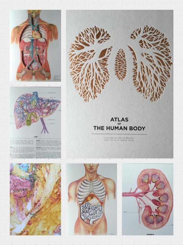 Atlas Of The Human Body A Beautiful Die Cut Illustrative Book Of