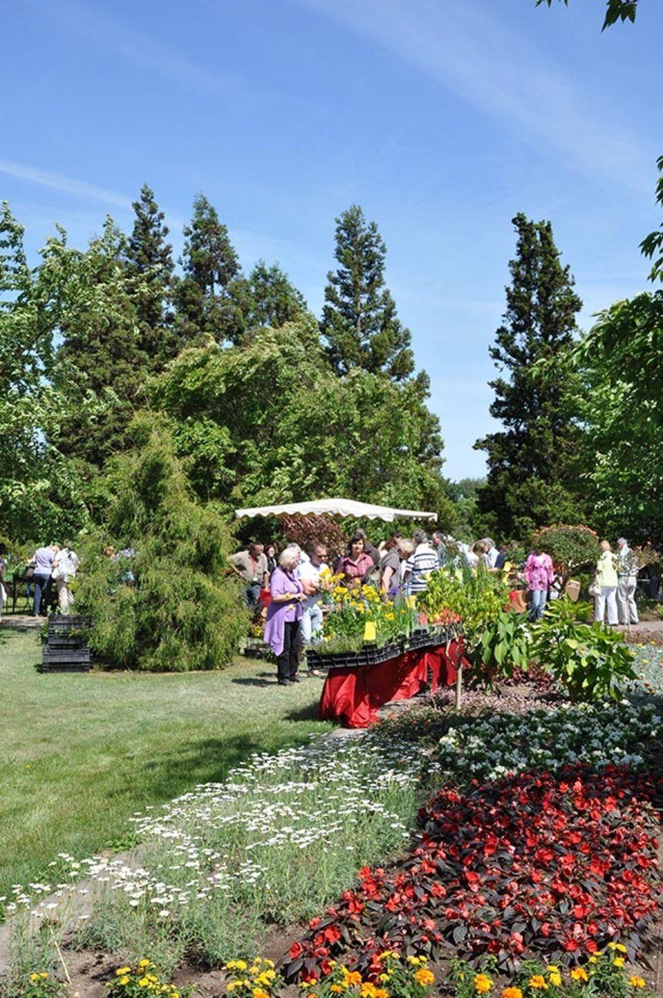 Botanischer Garten Marburg Pflanzenmarkt Des Jahres Von Pflanzenmarkt Marburg Im Mai Pflanzenmarkte In Hessen In Bezug Auf Botanischer Garten Garten Pflanzen
