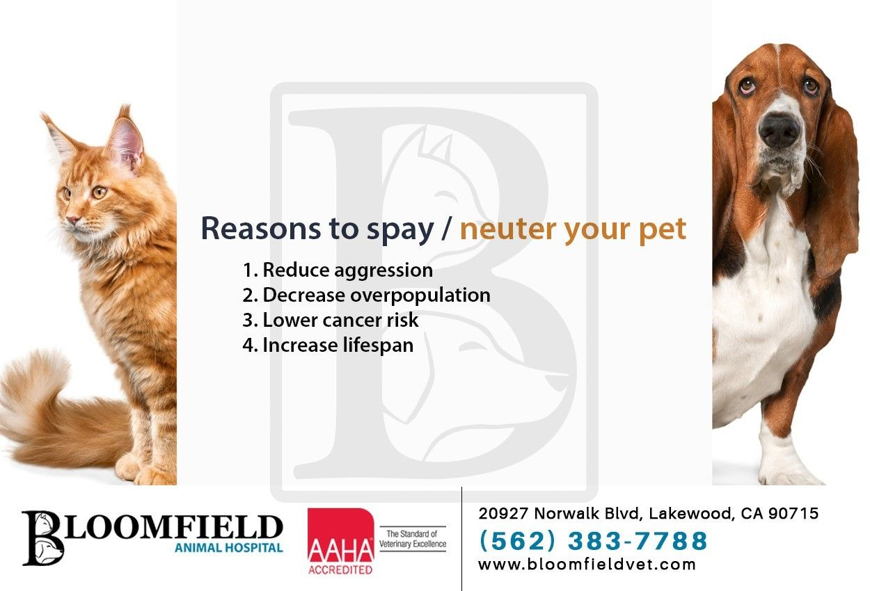 It's important to spay and neuter your pet at a quality