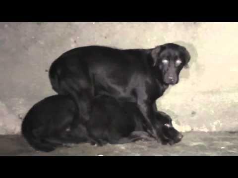 Don T Buy Puppies From Pet Shops Buy Puppies Pet Store Puppies Pet Shop