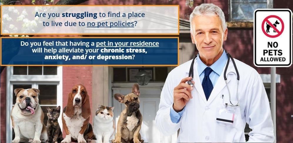 48+ Emotional support animal doctor letter example trends