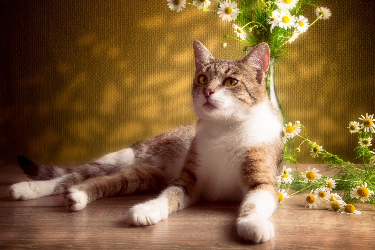 Pet friendly design decorating tips for your home home