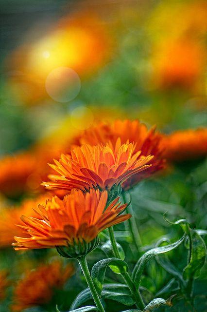 Resultado de imagen de flores naranjas pinterest