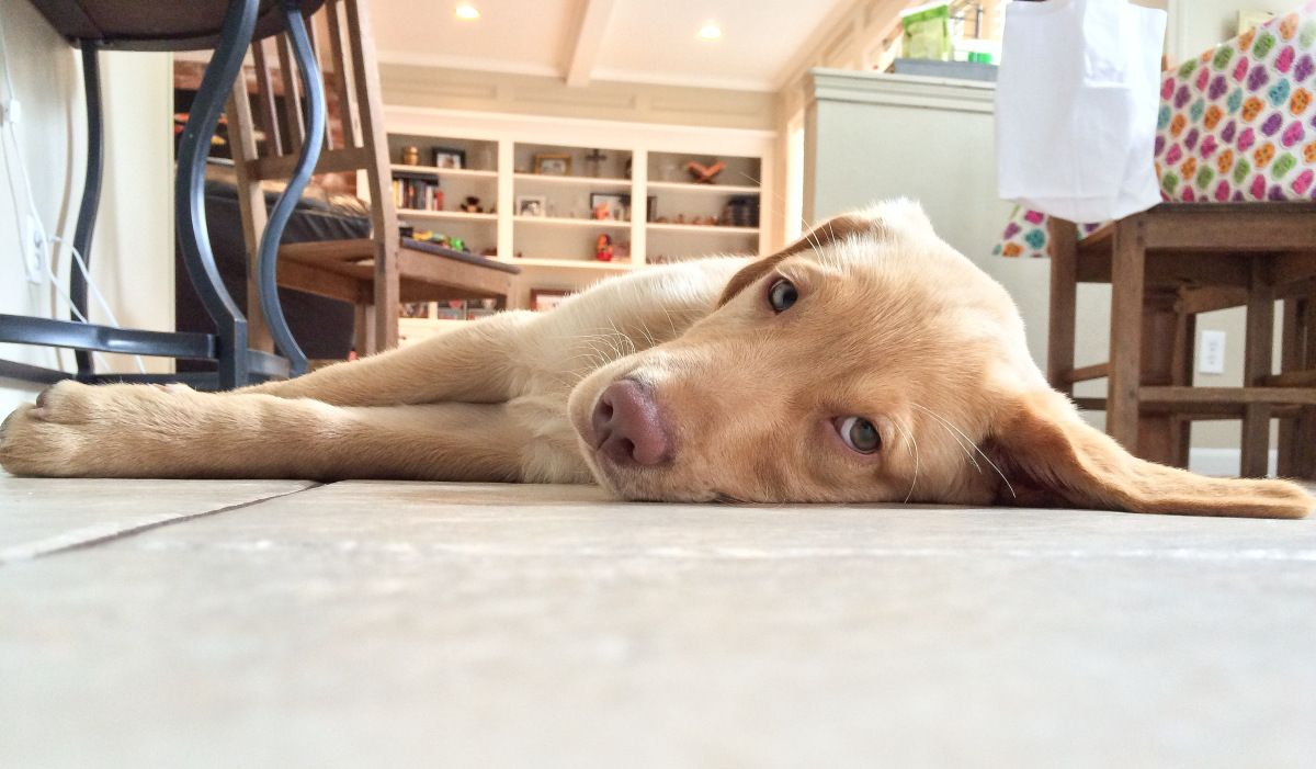 """Rudy can do a mean Floor Flop---he can go THIS way (above) or THAT way. (Below.) """"And he shows no mercy with cuteness that could kill. He has no control of his floppy puppy body...his landing is li..."""