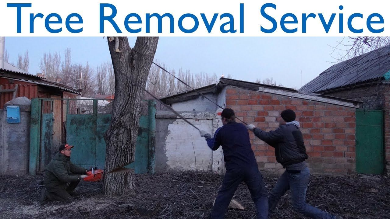 Gympie Tree Removal Service Tree Removal Service Tree Removal Removal Services