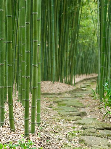 Bamboo Labyrinth, Japan.                              I would love to hear a bamboo forest in the wind.