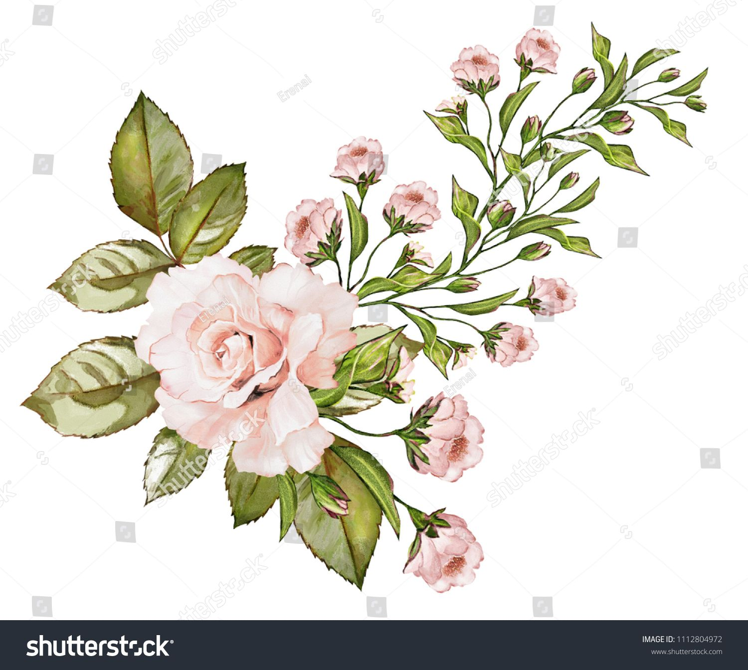 Watercolor Drawing Of A Branch With Leaves And Flowers Botanical Illustration The Composition Of Pink Rose Watercolor Drawing Botanical Illustration Drawings