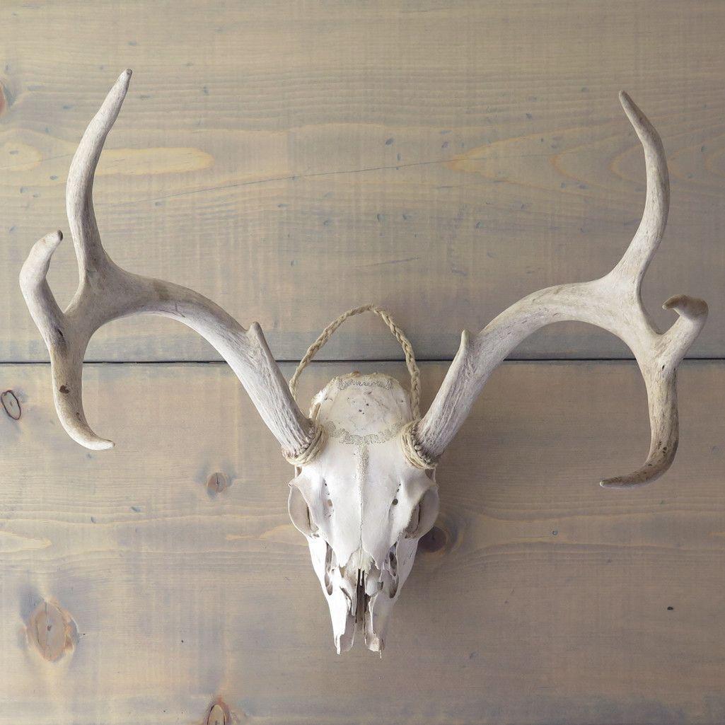 Old Deer Skull And Antlers Deer Skulls Deer White Vintage