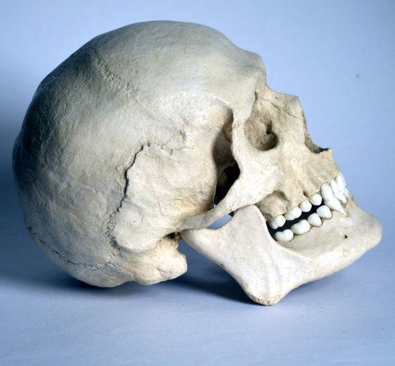Male Human Skull Replica by artskulls on Etsy