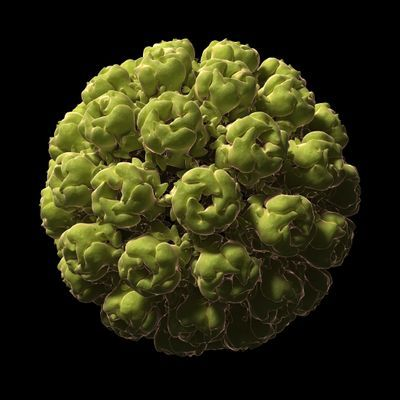 These 12 Viruses Look Beautiful Up Close But Would Kill