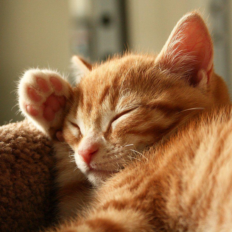 埋め込み画像 Willow and Strawberry ) Cats, Kittens, Animals