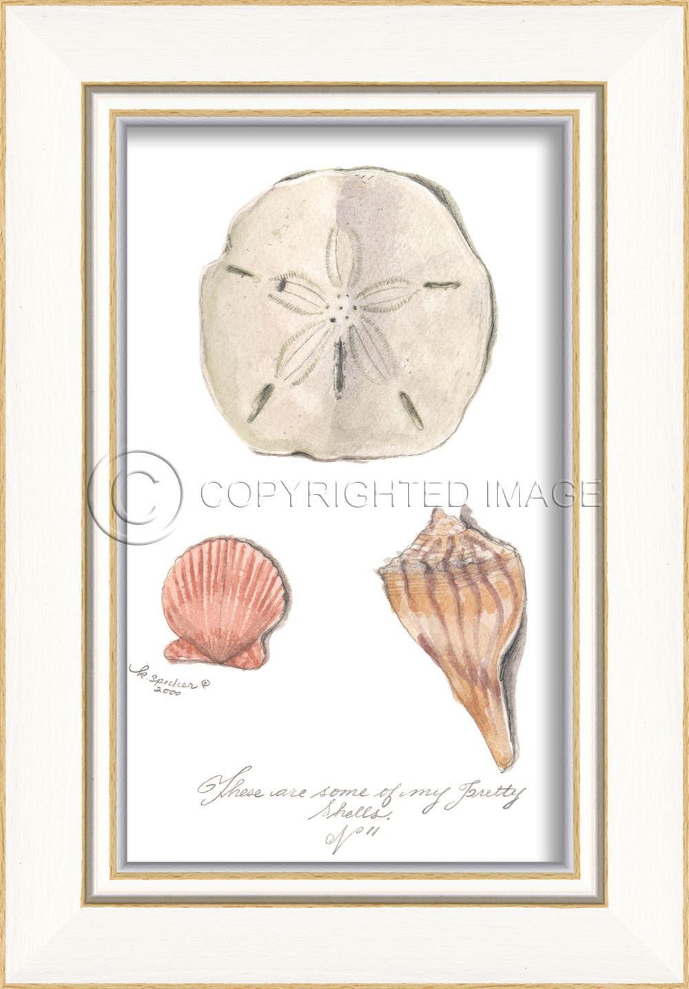Three Shells (White Frame) - Beach Painting By Kolene Spicher, Spicher and Company - Distinguished Imports