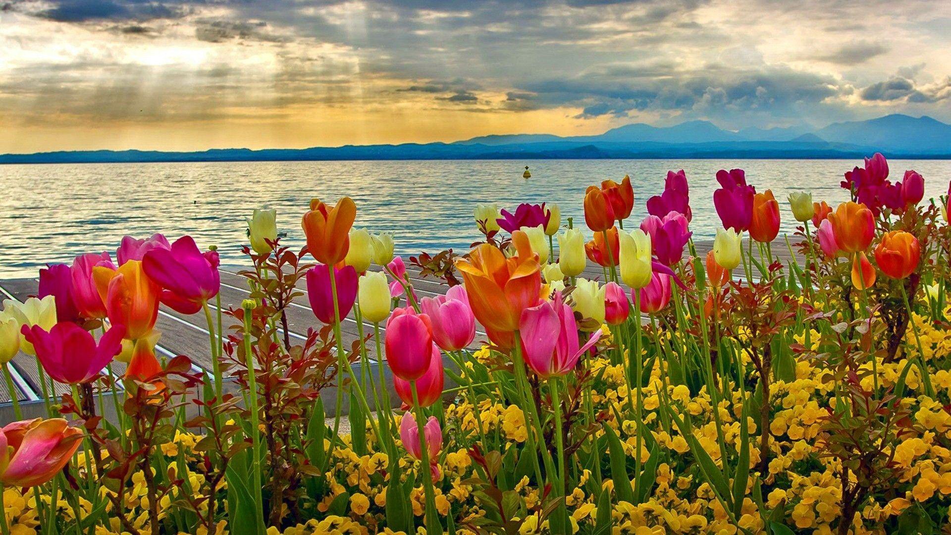 Spring Nature Desktop Backgrounds Hd Best Hd Wallpapers Spring Desktop Wallpaper Spring Flowers Wallpaper Spring Wallpaper