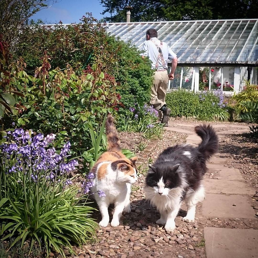 The Gunby Cats Enjoyed A Good Gossip About Head Gardener Clive As Soon As His Back Was Turned Gunbyhall Cats And Kittens Love Your Pet Cats Of Instagram