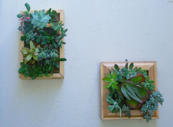 Vertical Succulent Planter Living Wall Art Kit Redwood