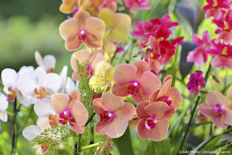 6 Orchidees Originales A Cultiver Sans Crainte Orchidee Rempoter Orchidee Faire Refleurir Une Orchidee