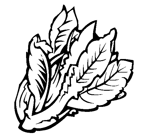 Lettuce Leaf Colouring Pages Coloring Pages Leaf Coloring Page Colouring Pages