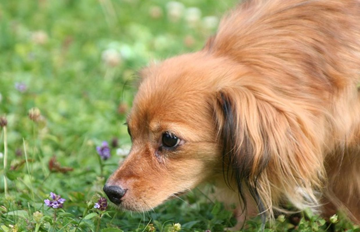 Emotional Support Animal Laws What You Need to Know