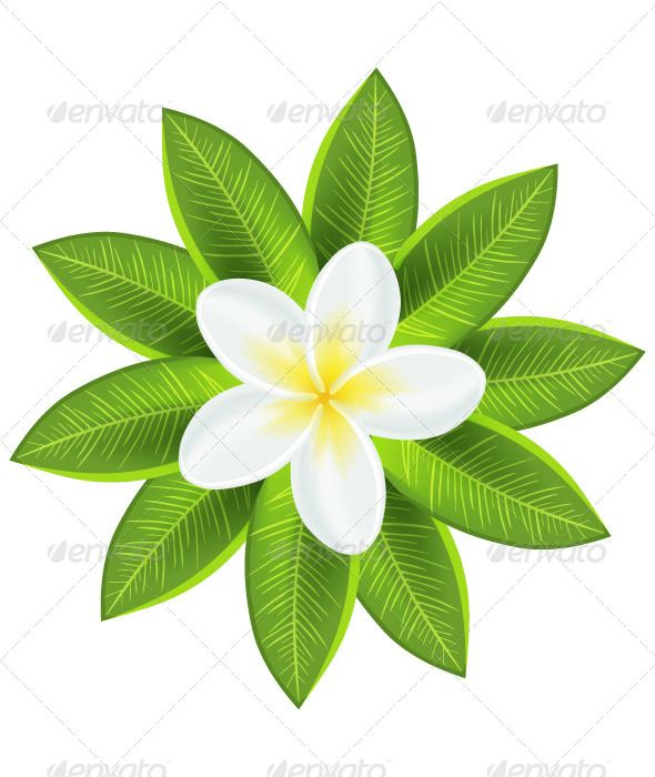 Plumeria Flower Template Tinkytyler Org Stock Photos Graphics Tropical Flowers Plumeria Flowers Plumeria