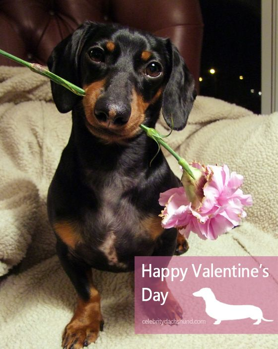 10 Ways To Woo Your Woman This Valentine S Day Cute Animals