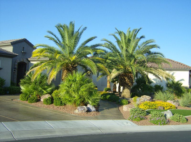 Beautiful front yard landscaping ideas with palm trees for Garden design with palms