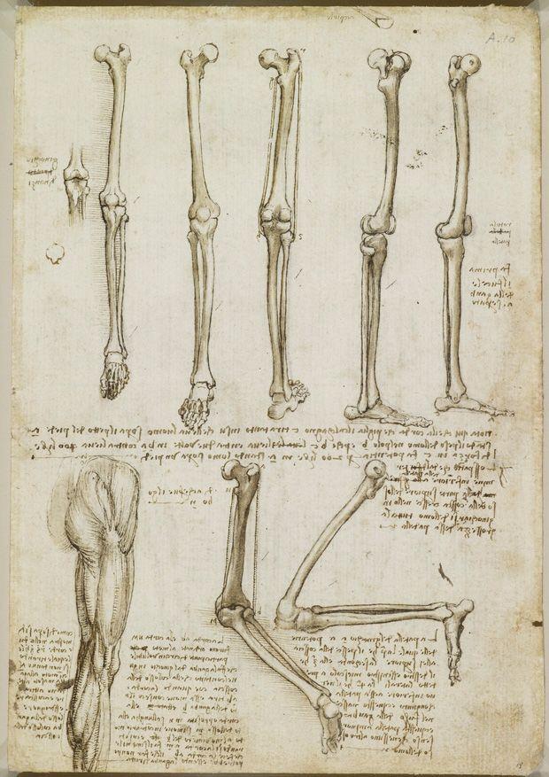 Leonardo da Vinci\'s anatomical sketches. | Pinterest