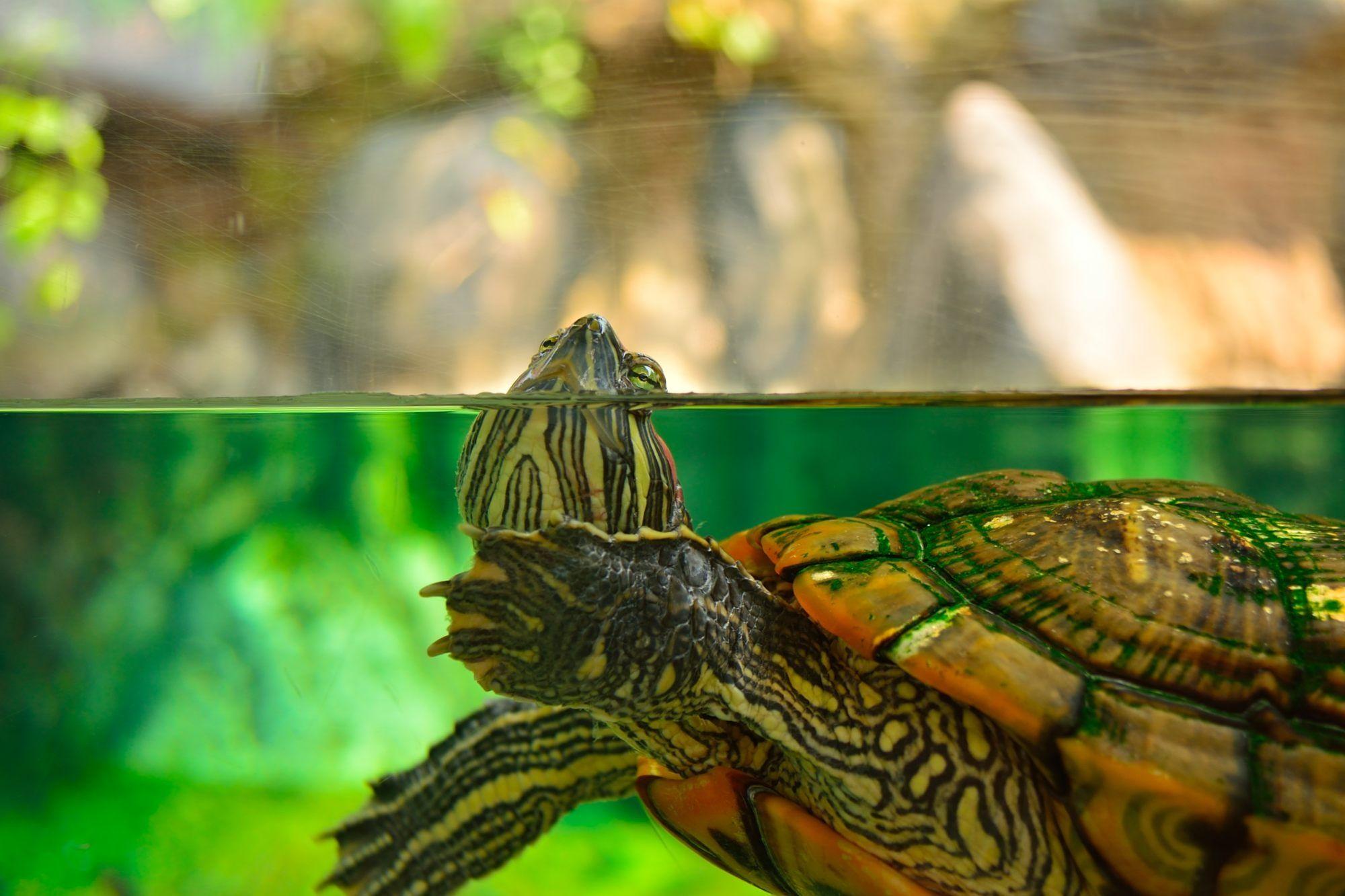 Turtle by Daniel  on 500px