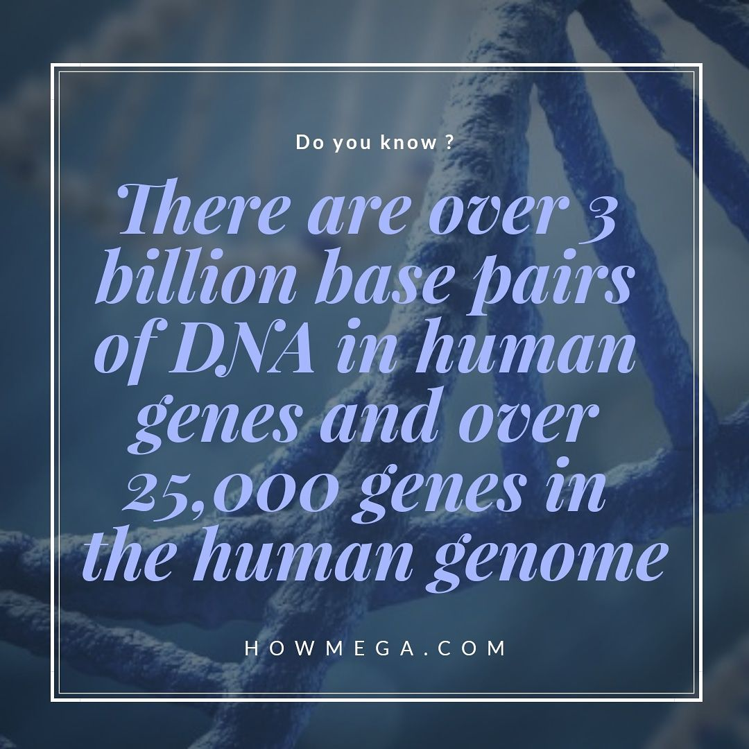 There Are Over 3 Billion Base Pairs Of Dna In Human Genes
