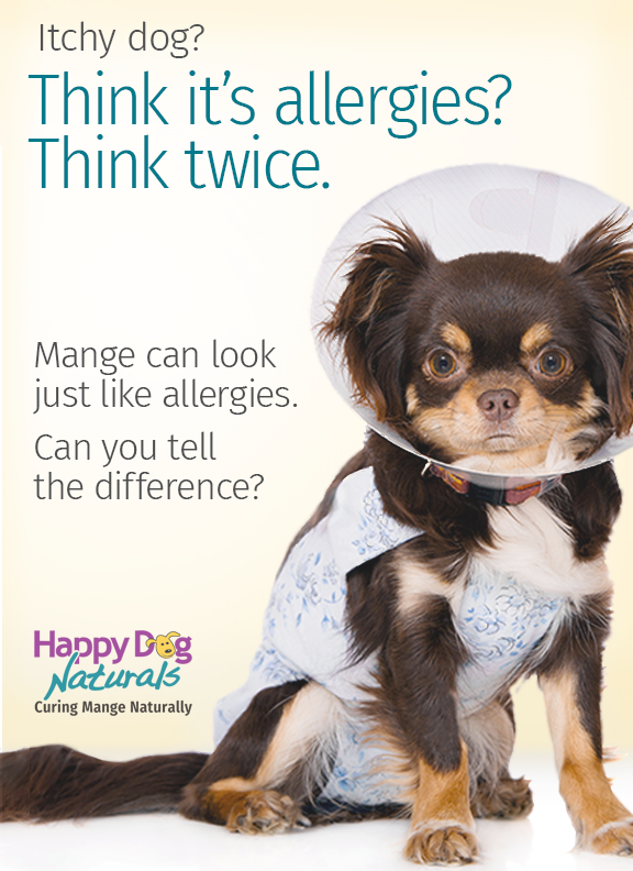 What type mange is it? Try the dog mange symptom checker