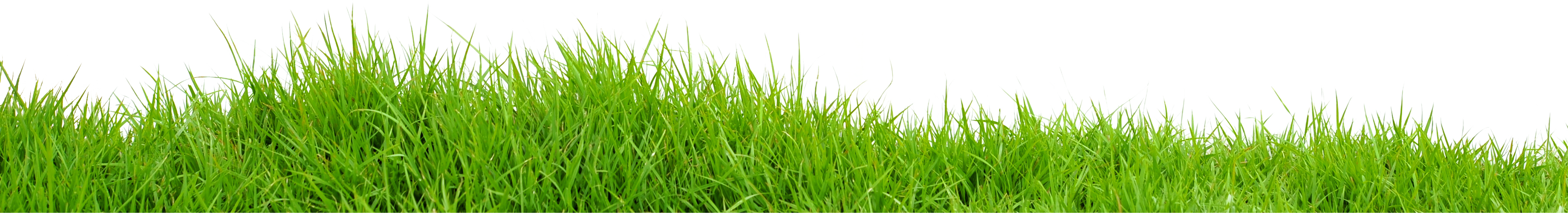 Textures nature elements vegetation dry grass dry grass - Grass Png Free Pictures Images Grass Png Download Free