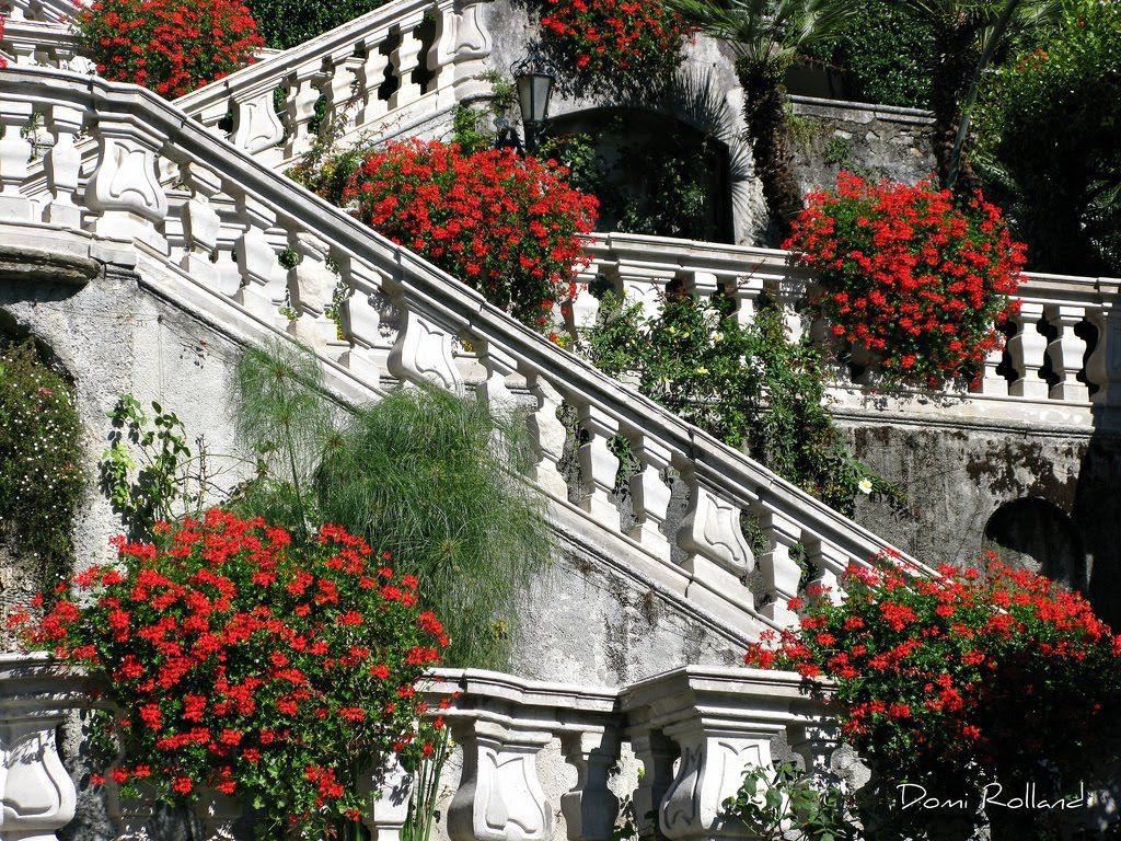 Villa carlotta lago maggiore ana rosa red e red white for Case tradizionali italiane