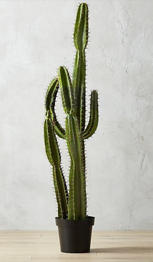 """60"""" Cardón Potted Cactus + Reviews Cactus, Cactus plants"""