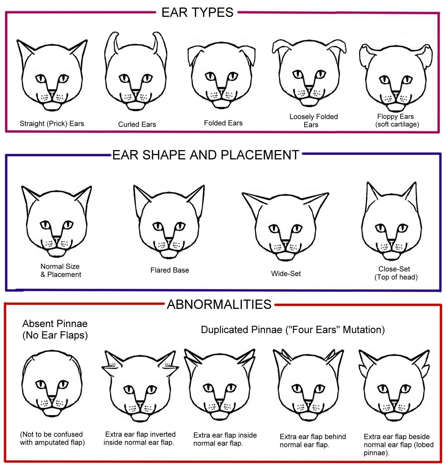 CURLED, CURVED AND FOLDED EAR CATS Miau! Pinterest