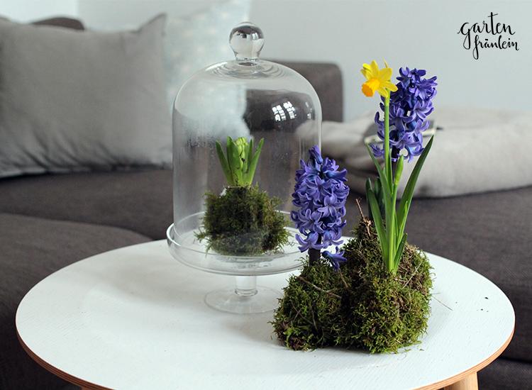 Frühlingshaftes Kokedama DIY -  Frühlingshaftes Kokedama DIY – Garten Fräulein – Der Garten Blog  - #balkonpflanzen #DIY #Frühlingshaftes #Kokedama