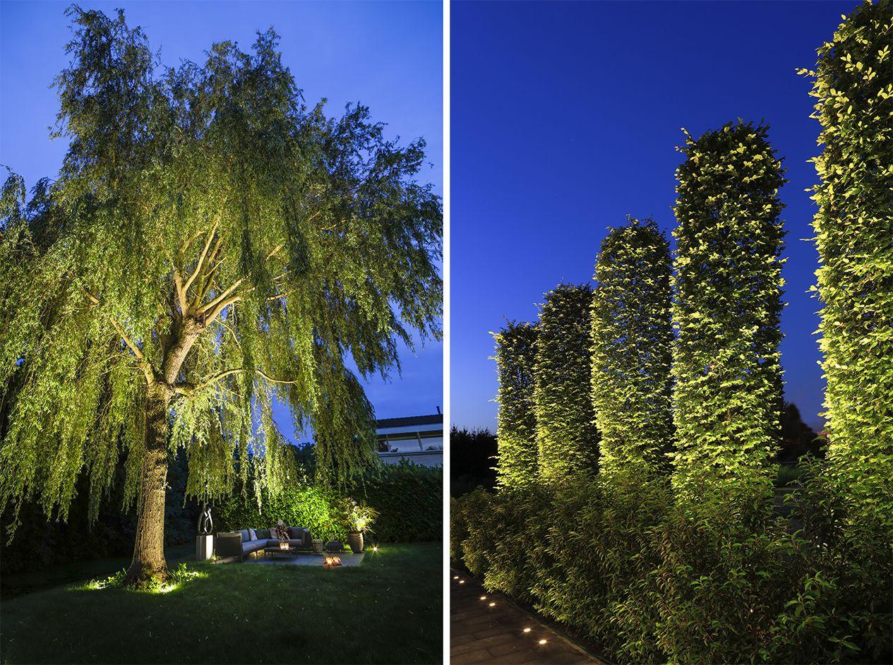 Bomen Licht Je Uit Met In Lite Spots Zen Garten Gartengestaltung Im Freien