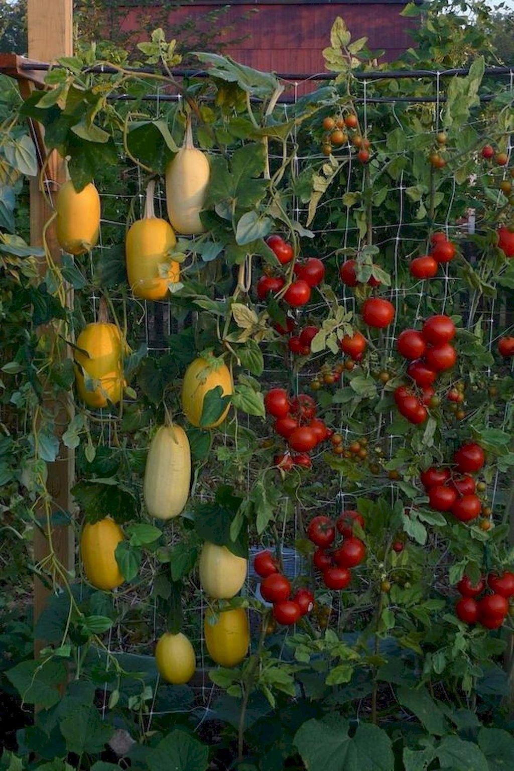 75 Stunning Backyard Vegetable Garden Design Ideas - Homekover #veggiegardens