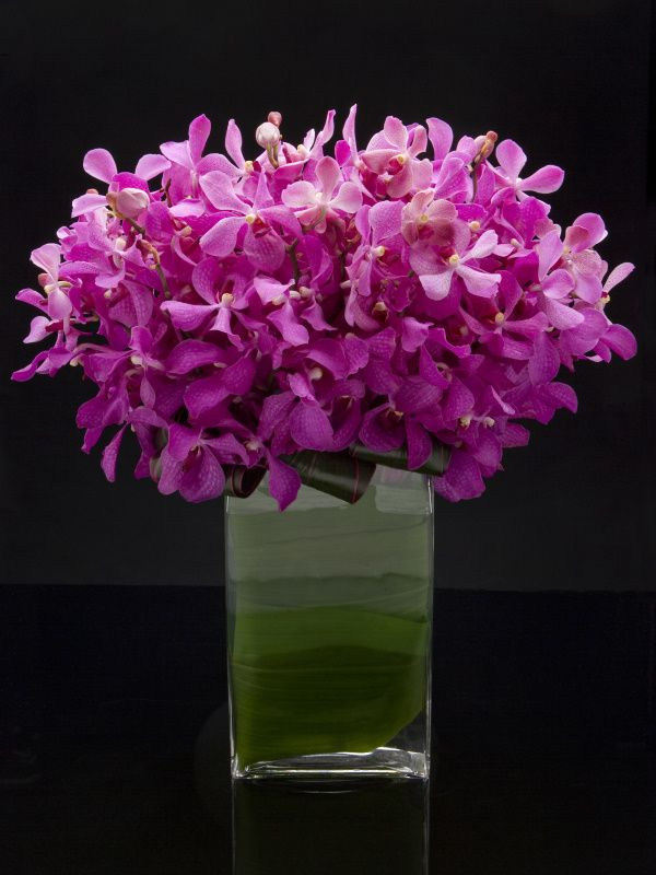 modern orchid. could use monochromatic arrangements and put 2-3 on each  table with