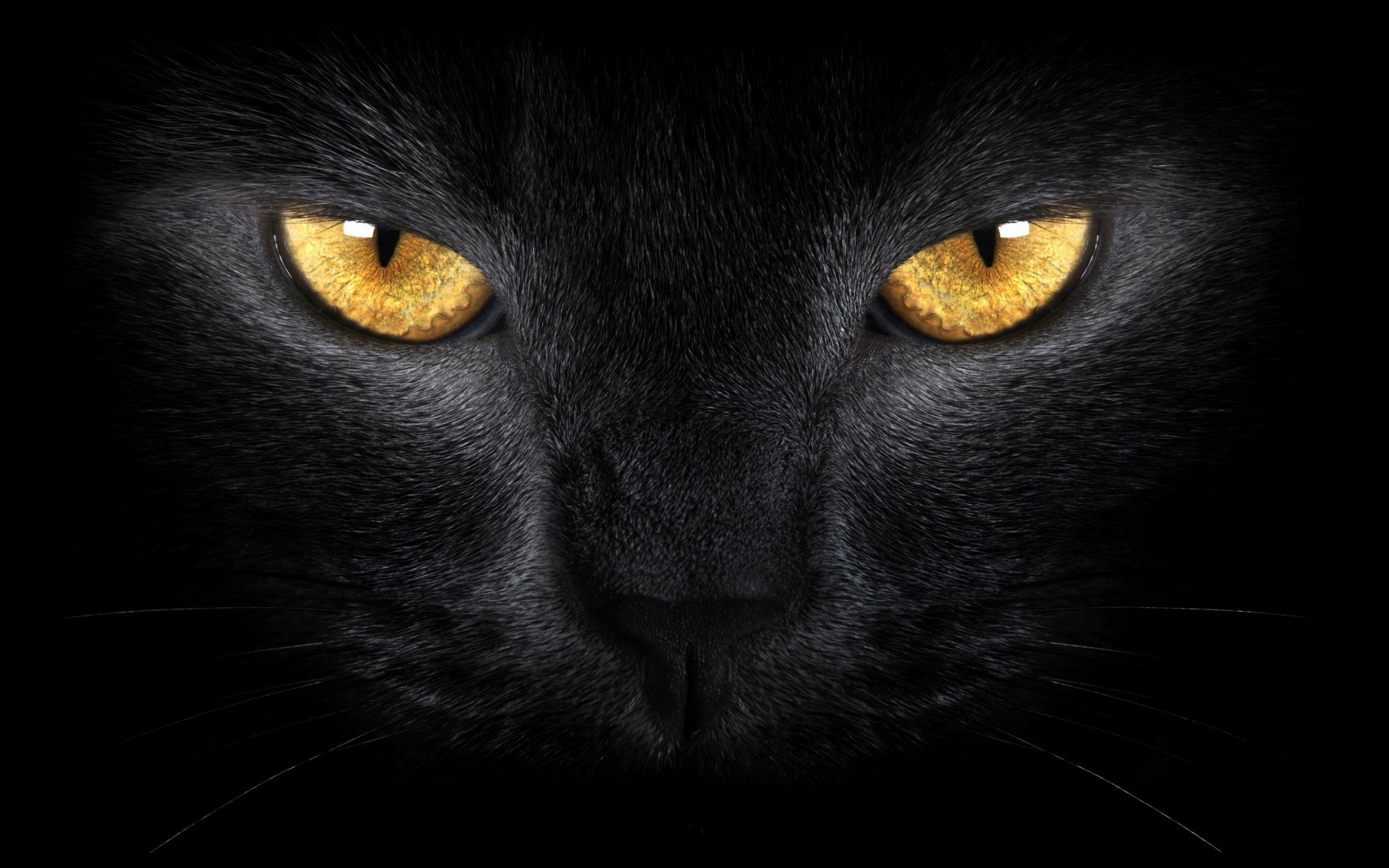 Black Cat Eyes Wallpapers Hd Wallpapers Laptop Wallpapers Eyes Wallpaper Black Cat Eyes Cat Poems