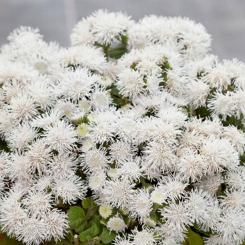 Pin On Bee Friendly Plants