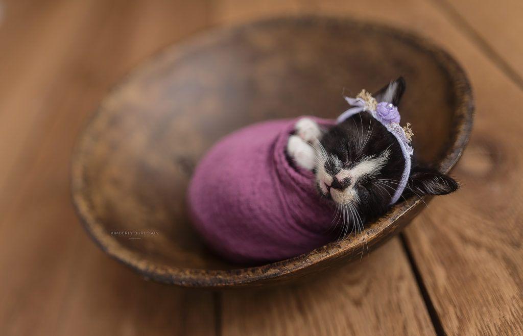 Newborn Kitten Photoshoot Newborn Kittens Kittens And Puppies
