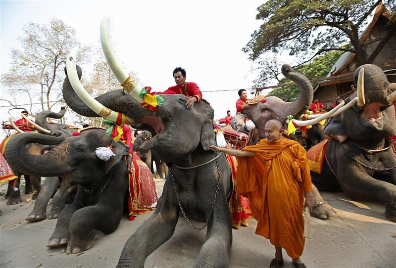 http://totalmundi.com   *****-Un monje budista tailandés bendice elefantes